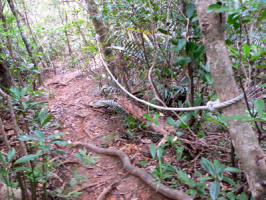 急な傾斜道にはロープが渡してある